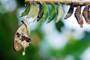 Canva - Brown and White Swallowtail Butterfly Under White Green and Brown Cocoon in Shallow Focus Lens